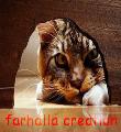 farhalla