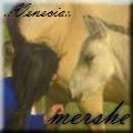 mershe