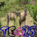 tea25