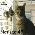 mariscal47