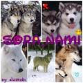 sora_nami
