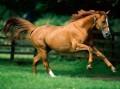equus123