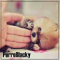 perroblacky