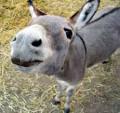 burros everywhere