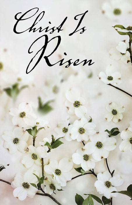 Christ Is Risen Dogwood Easter Bulletin (Pkg of 50) (Loose-leaf)