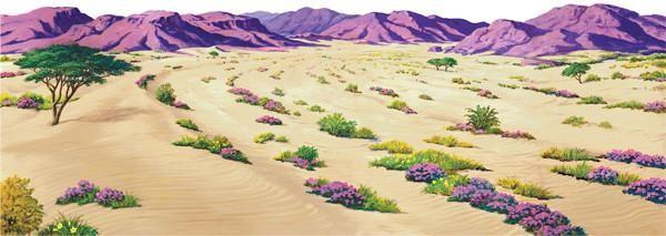 Large Desert Overlay (General Merchandise)