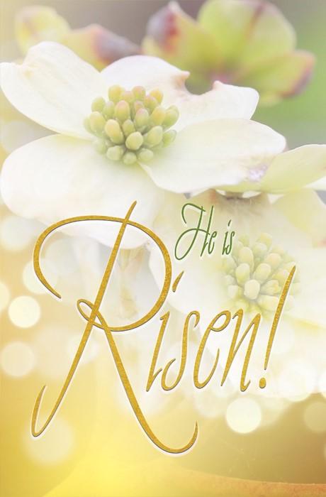 Risen Easter Dogwood Bulletin (Pkg of 50) (Bulletin)