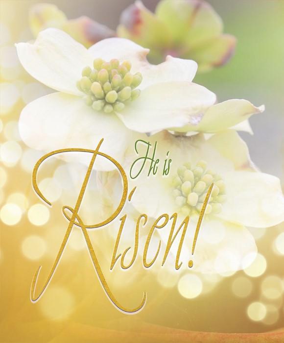 Risen Easter Dogwood Bulletin Large (Pkg of 50) (Bulletin)
