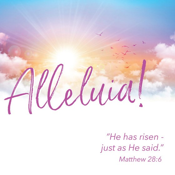 Alleluia Easter Cards (pack of 5) (Cards)