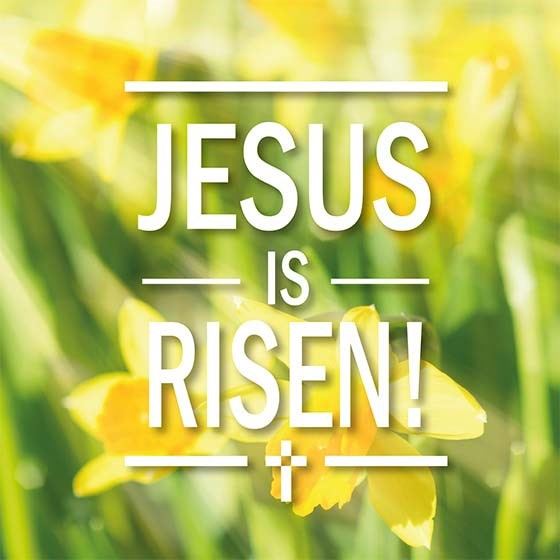 Jesus is Risen Easter Cards (pack of 5) (Cards)
