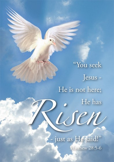 Risen Easter Cards (pack of 5) (Cards)