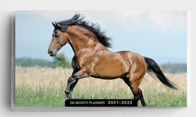 2021 28-Month Planner: Horses (Paperback)