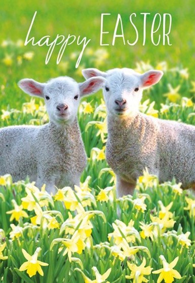Easter Cards: Happy Easter (Sheep) (Pack of 5) (Cards)