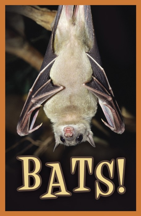 Bats! (Pack Of 25) (Tracts)