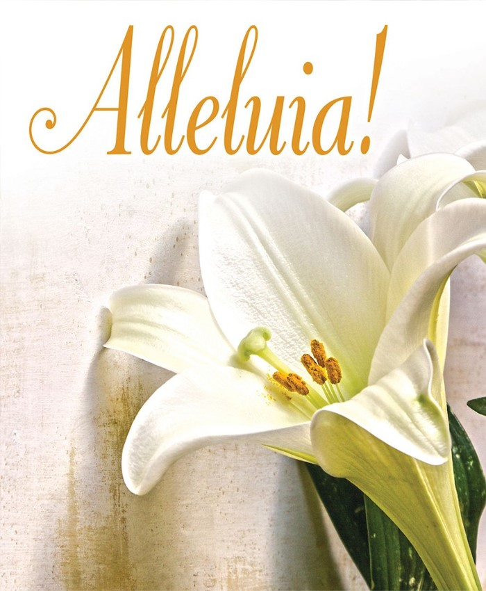 Alleluia! Easter Lilies Bulletin, Large (Pkg of 50)