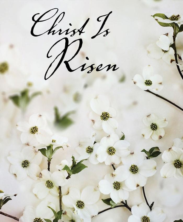 Christ Is Risen Dogwood Easter Bulletin, Large (Pkg of 50)