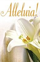 Alleluia! Easter Lilies Bulletin (Pkg of 50) (Loose-leaf)
