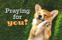 Praying for you! Postcard (pack of 25)