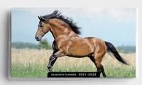 2021 28-Month Planner: Horses (Paperback)