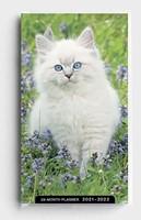 2021 28-Month Planner: Kittens (Paperback)