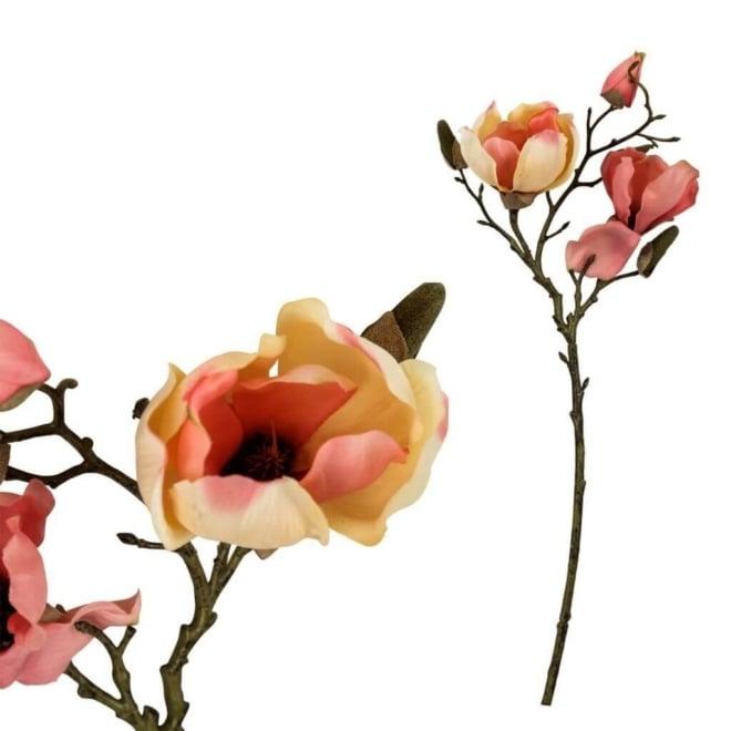 Magnolia bloem 2 open flowers