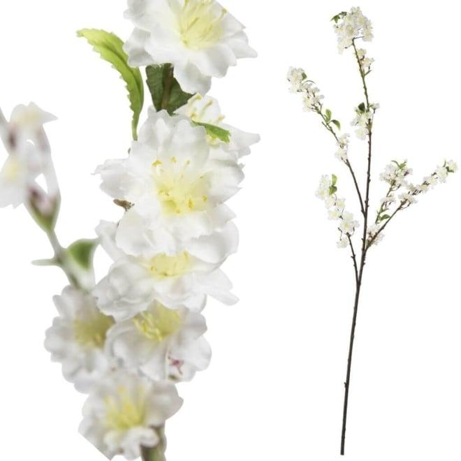 Blossom bloem white sakura