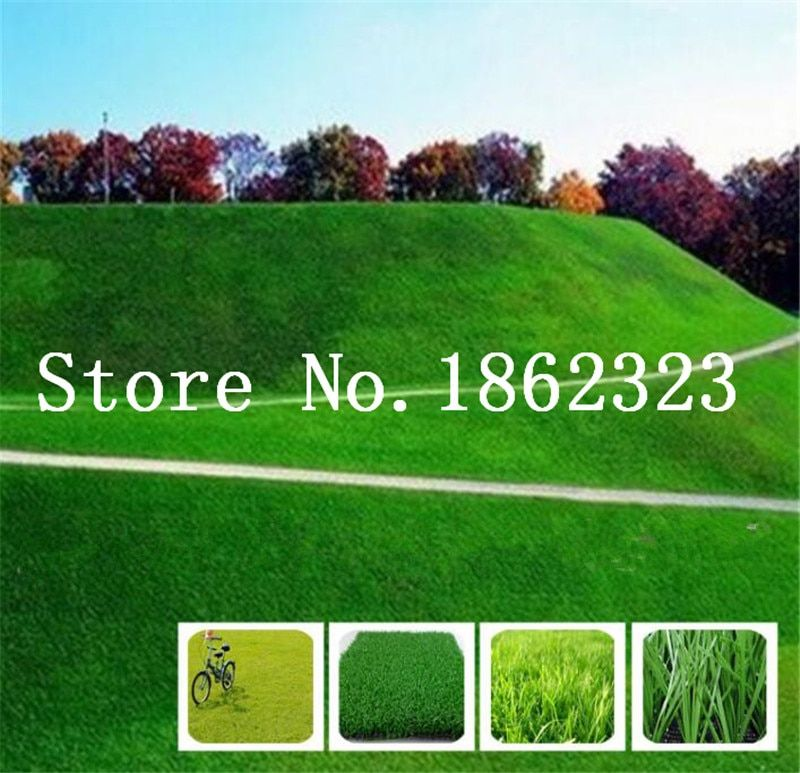500 PCS Seeds Colorful Grass Bonsai Lawn Perennial Plants Garden Soccer Fields N