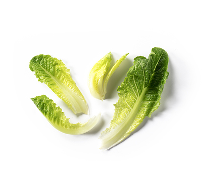 Romaine