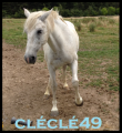 cléclé49