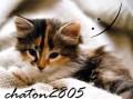 chaton2805