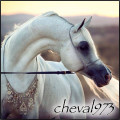 cheval973