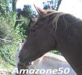 amazone50