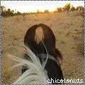 chicolonuts