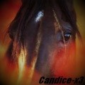 -candice