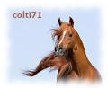 colti71