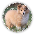 ~chloé~