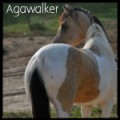 agawalker