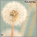nivarea