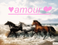 ♥amour❤