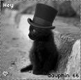 dauphin 66