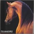 alisa1162