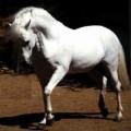 paulinehorse