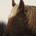 poney de star