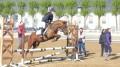 love horse celine