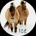 ice murmur