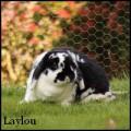 laylou ★