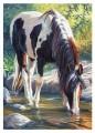 equitation753