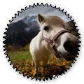 sacham60