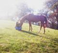 déesse-des-chevaux