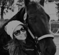 horsesugar